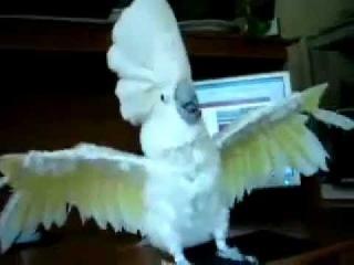 Попугай тусит!:)