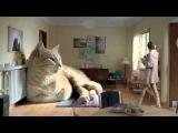 Милота^^самый большой кот)