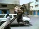 Ишак на дыbax02