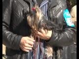 Большие и маленькие, умные и ленивые собаки на выставке в Керчи (заствка жуткая, правда)))