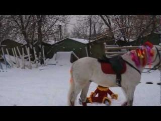В Отрадном лошади танцуют лезгинку