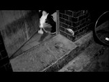 D-Bo ft. Emine Bahar - Blumen (RAF Camora & Benno Rmx) - X-MAS FREETRACK