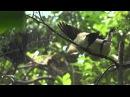 Замедленная съемка птиц купающихся в воде, под дождем, очень красивое видео