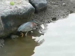 Ты смотри какая умная птичка!
