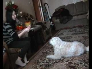 Маша и говорящий пёс.flv