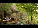 Floresta (V4) e Fumo de Cobra (V6) - Cocalzinho Escalada