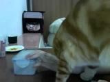 Кот просит открыть коробку.