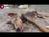 Emotional Dog Rescue (Can you watch without crying!) #2016