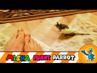 Nice Parrot run after legs & have a fun on EPIC FUN Movie + Songs for Kids