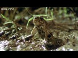 So Horny... Funny Talking Animals - Walk on the Wild Side, Series 2 Ep.6 preview - BBC One
