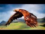 Барыкин Александр  - Птицы  #АлександрБарыкинПтицы