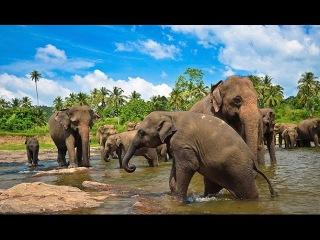Шри-Ланка. Таинственный остров. Супер фильм. National Geographic.