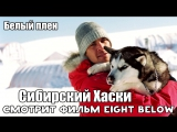 Сибирский Хаски смотрит фильм «Белый плен»