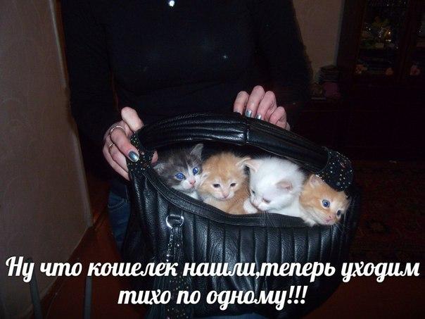 http://cs604316.vk.me/v604316298/1c7b0/1EkKE3xBkZ0.jpg