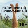 ♤НЕ ТИПИЧНЫЙ ПРИВОЛЬННЫЙ♤