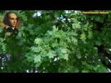 ФЕЛИКС МЕНДЕЛЬСОН - Струнный квартет №6 фа минор, соч. 80 - IV. Fuga