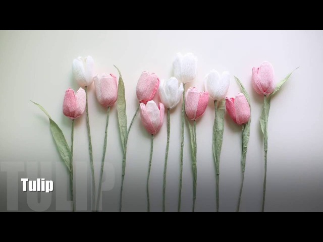 How to make Crepe Paper Flower : Tulips [easy simple]