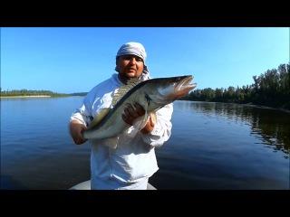 "Супер Рыбалка  Огромные судаки  Ловля Судака на джиг   1080p  ""BF""- 50"