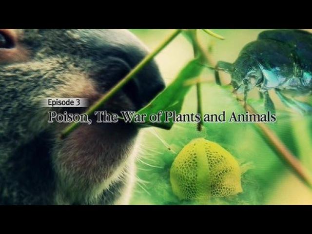 Яд Достижение эволюции 03 Ядовитая война растений и животных 2015 Видео Dailymotion смотреть онлайн без регистрации