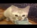 Смешное поведение кошек Funny behavior of cats Lustiges Verhalten von Katzen