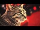Shine - Cat version