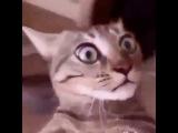 нетипичная Махачкала кот наркоман приколы 2016
