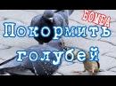80level Покормить голублей Первичная организация МИЦ в Крестово Городище