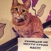 Саратов! #Живодерок_Хабаровска_втюрьму