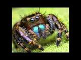 Балабама - Мой лучший друг виктор паук
