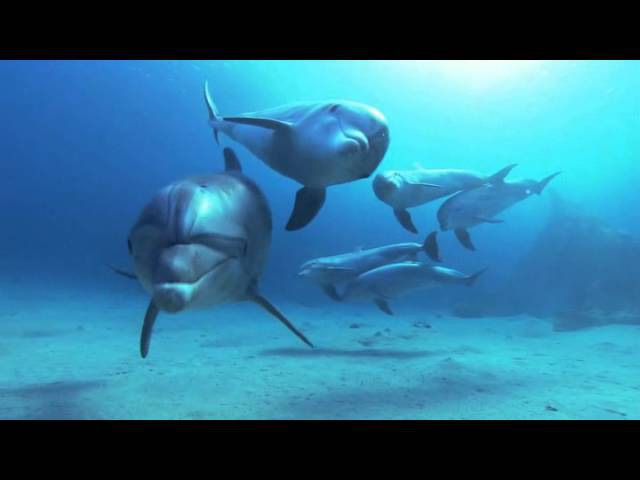 Завораживающая красота! Дельфины в глубоком синем океане. pfdjhf;bdf.ofz rhfcjnf! ltkmabys d uke,jrjv cbytv jrtfyt.