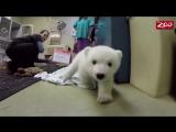 Белый_медвежонок_—_Нора