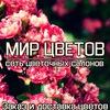 Мир цветов • Доставка букетов в Воронеже •