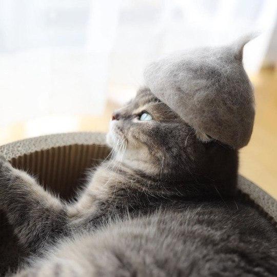 Шапочки для котов