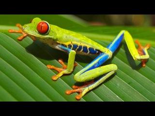 Коста-Рика – Восхитительная флора и фауна! (качество – 4К)