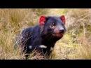 Генетические мутанты. Животный мир Австралии. Документальный фильм.