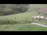 Собачья работа 6 sec