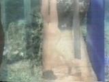 Alice in Wonderland (1976) (Kristine DeBell, Ron Nelson, Bradford Armdexter)