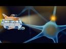 Мозг Развивающий мультфильм про строение мозга для детей