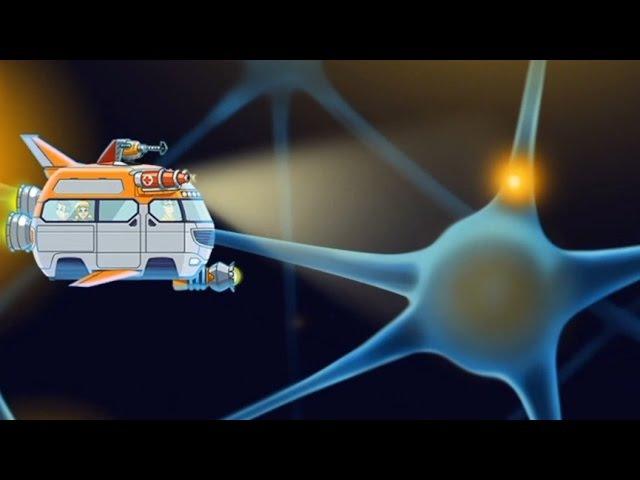 Мозг. Развивающий мультфильм про строение мозга для детей