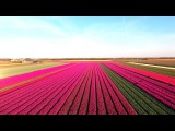 Amazing Tulip Fields