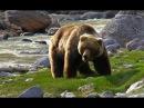 Самые опасные животные в мире! Северная Америка.  Документальный фильм National Geographic.