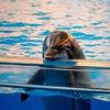НЕТ дельфинарию в Челябинске | СВОБОДУ дельфинам