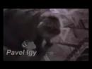 ТЕСТ НА ПСИХИКУ КТО не ЗАСМЕЁТСЯ ИЛИ не УЛЫБНЁТСЯ - провалит ( - YouTube