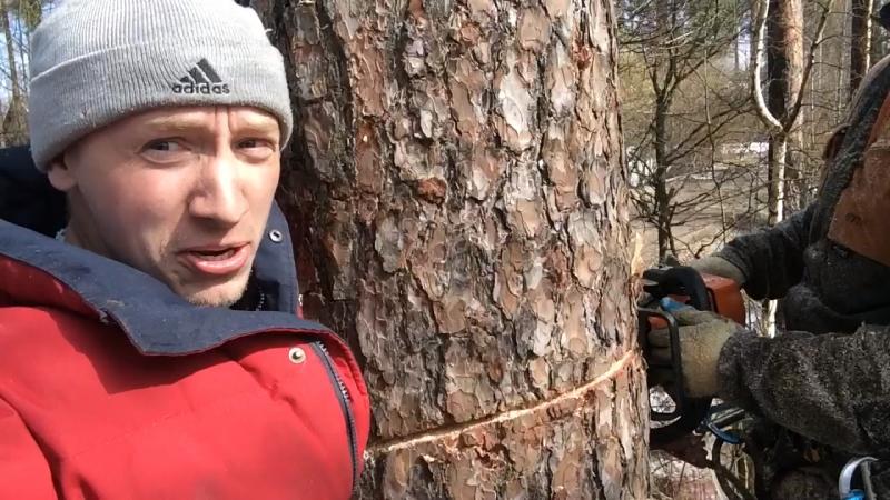 15 апреля 2016го, Имитация падения с дерева