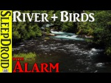 ⏰10 hours of Nature Sounds and Birdsong with ALARM SOUND🔔 -Black Screen Sleep Sounds