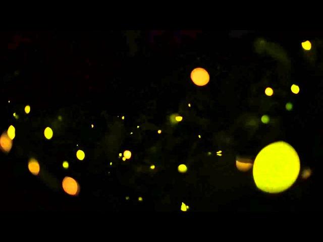 Synchronizing Fireflies