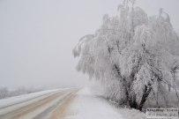 16 декабря 2014 - Зимний лес в Самарской луке у села Александровка