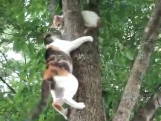 Кошка снимает котенка с дерева