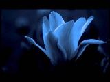 Crystallize - Lindsey Sterling & Allan Z & CaLaDo (zouk remix)