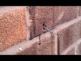 Bionic bee pulls nail out of a wall